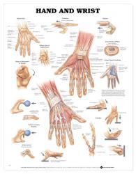 27480-9790 - Hand and Wrist