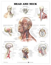 27480-9990 - Head and Neck
