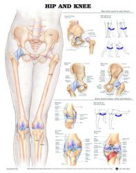 27480-9780 - Hip and Knee